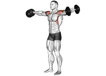 élévations latérales épaules