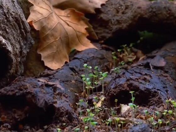 photo champignon