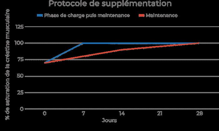 graphique méthode supplémentation créatine en fonction du temps