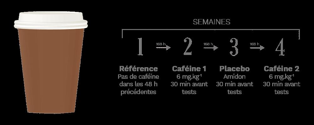 protocole étude caféine force musculaire