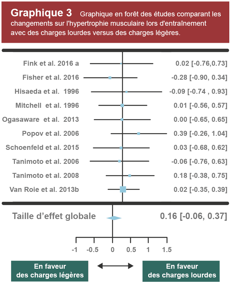 graphique 3 comparaison études hypertrophie musculaire