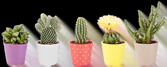 cactus appartement