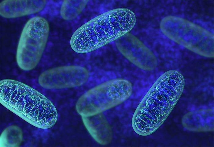 illustration mitochondrie