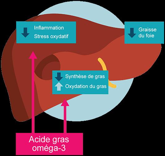 bienfaits oméga 3 maladie foie gras