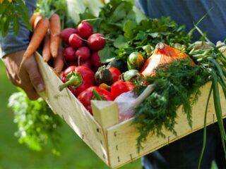 consommation panier fruit légume locaux