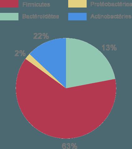 diagramme composition microbiote intestinal bactéries pourcentage