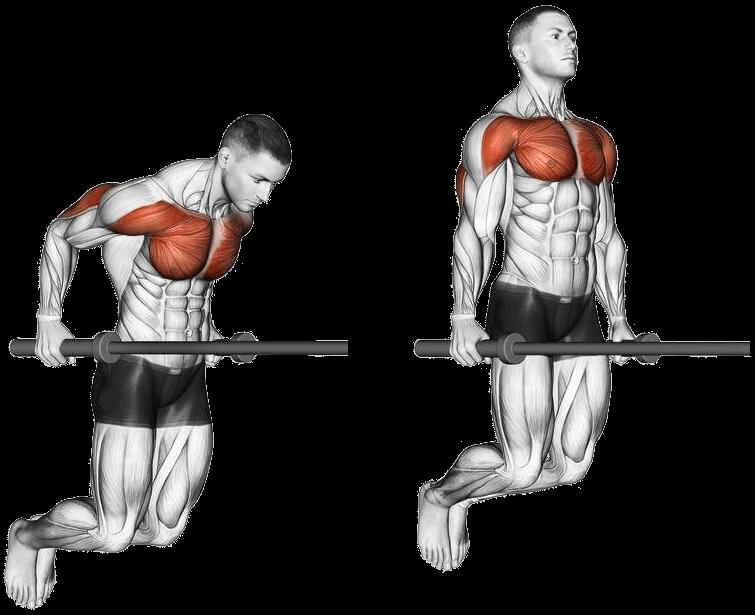 Les dips pour se muscler les triceps, deltoïdes et pectoraux