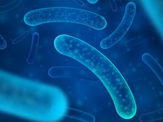 probiotique lactobacillus reuteri santé osseuse