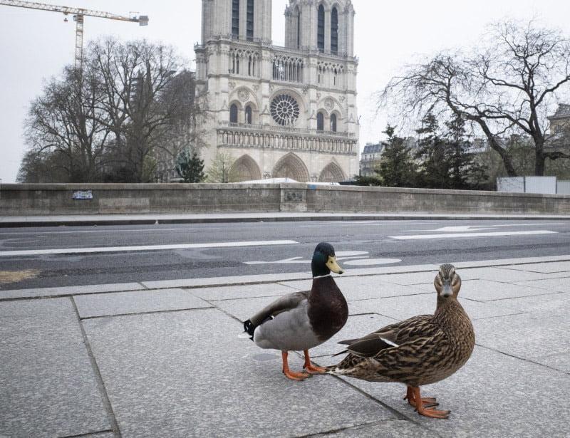 canards confinement Paris