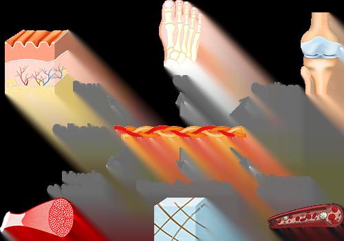 fonctions du collagène corps humain