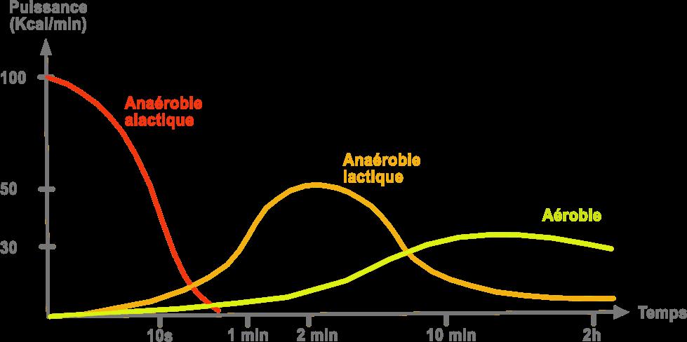 courbe de Howald métabolisme énergétique anaérobie alactique lactique aérobie