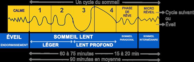 schéma cycle du sommeil