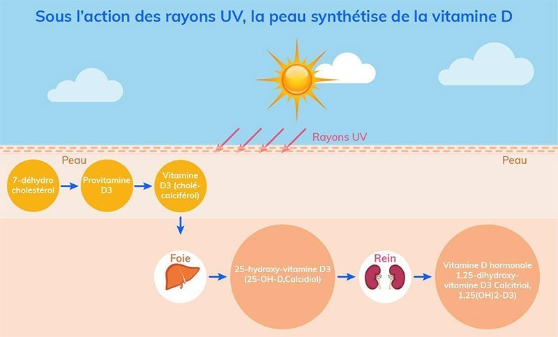 production vitamine D peau