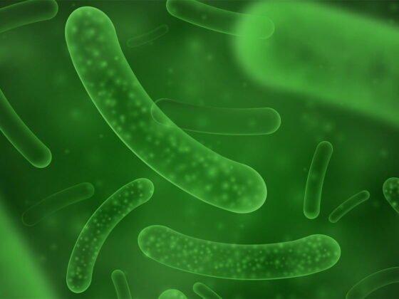 probiotique syndrome intestin irritable