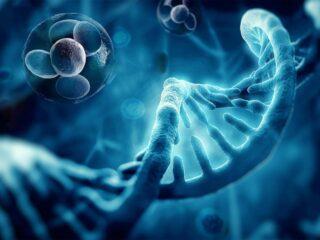 génétique épigénétique