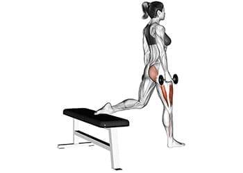 squat bulgare haltères quadriceps