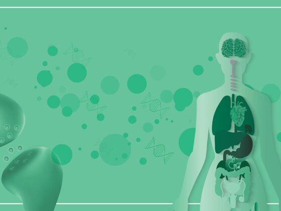 cannabis système endocannabinoïde