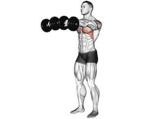 élévation frontale épaules