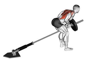rowing barre t landmine dos