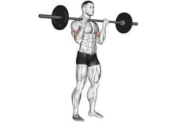 curl barre biceps