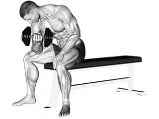 curl concentré biceps
