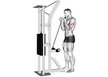 curl biceps poulie basse musculation