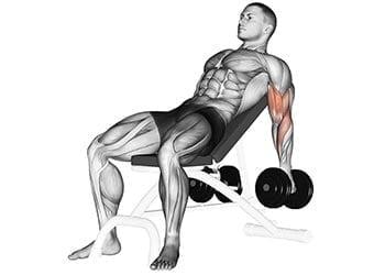 curl haltère incliné biceps