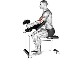 curl haltère prise marteau au pupitre biceps